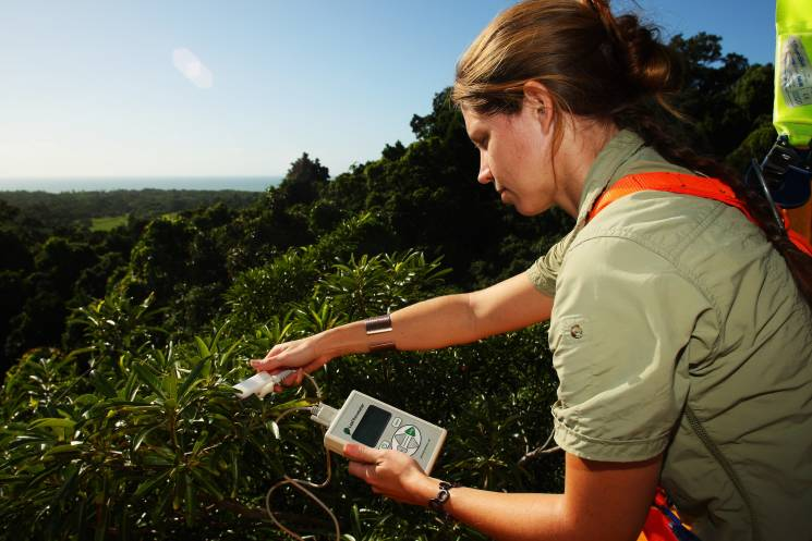 A scientist in Cape Tribulation, Australia