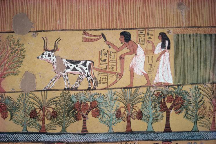 Egypt Cave Painting Farming