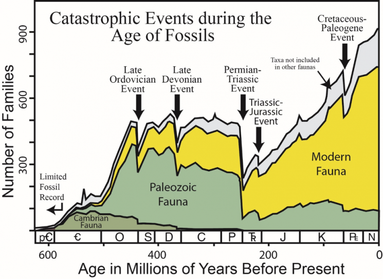 The Sepkoski Curve: A straightforward look at the earth's biodiversity through time
