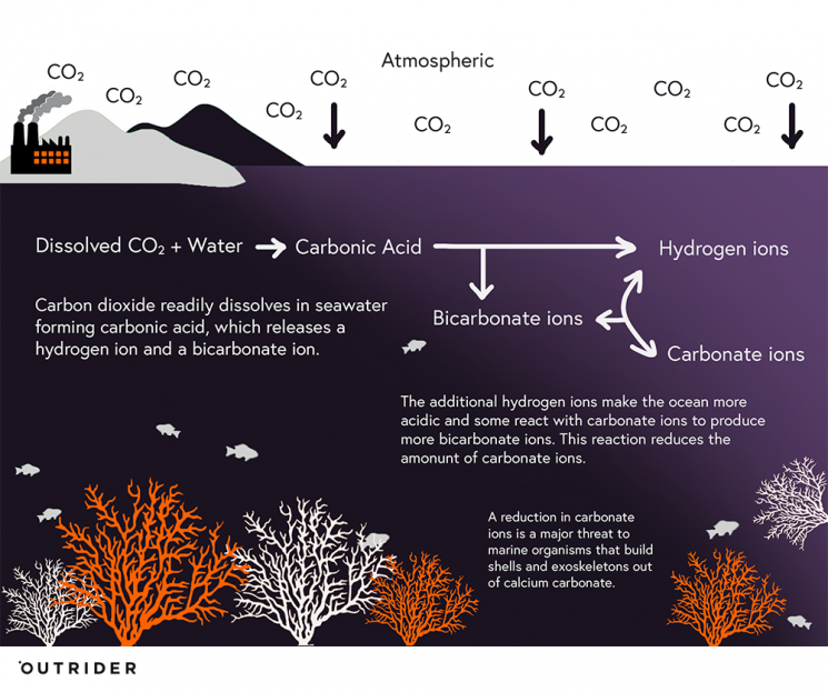 The process of ocean acidification; Image adapted from Climate Commission
