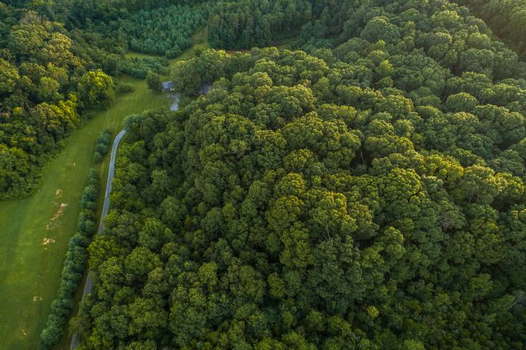 The carbon offset program helps forests like this one near Knoxville, Tennessee; Nathan Anderson; Unsplash