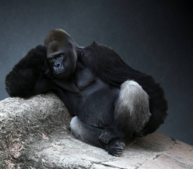 Gorilla Thinking; Getty Images