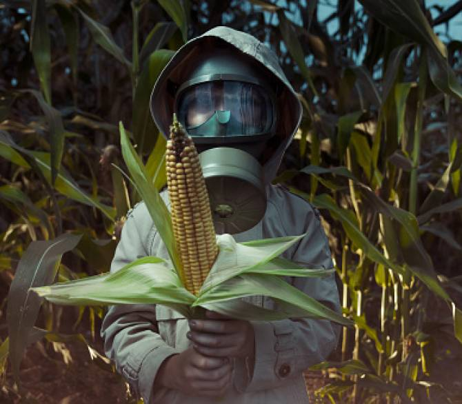 Worker dressed to avoid pesticide pollution on corn;Getty Images