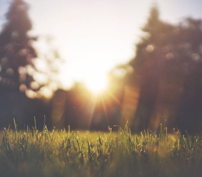 Make your lawn a sustainable haven; Jake Givens on Unsplash