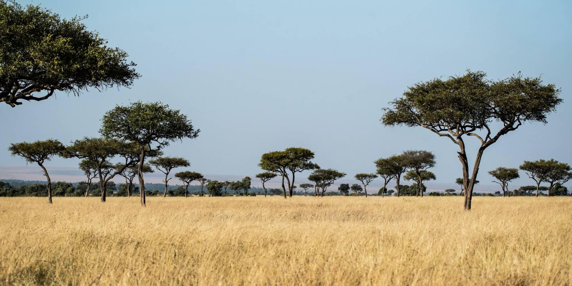 La sabana abierta de África dio vida a la diversidad de organismos
