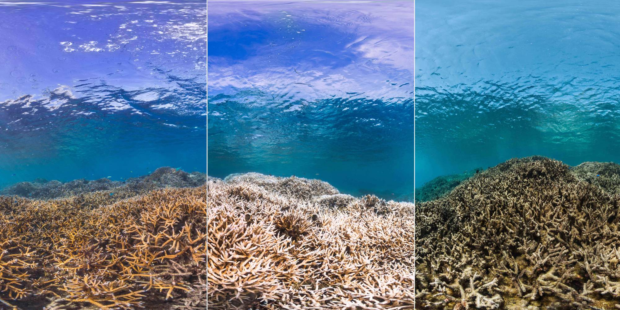 Stages of the death of a coral reef; The Ocean Agency