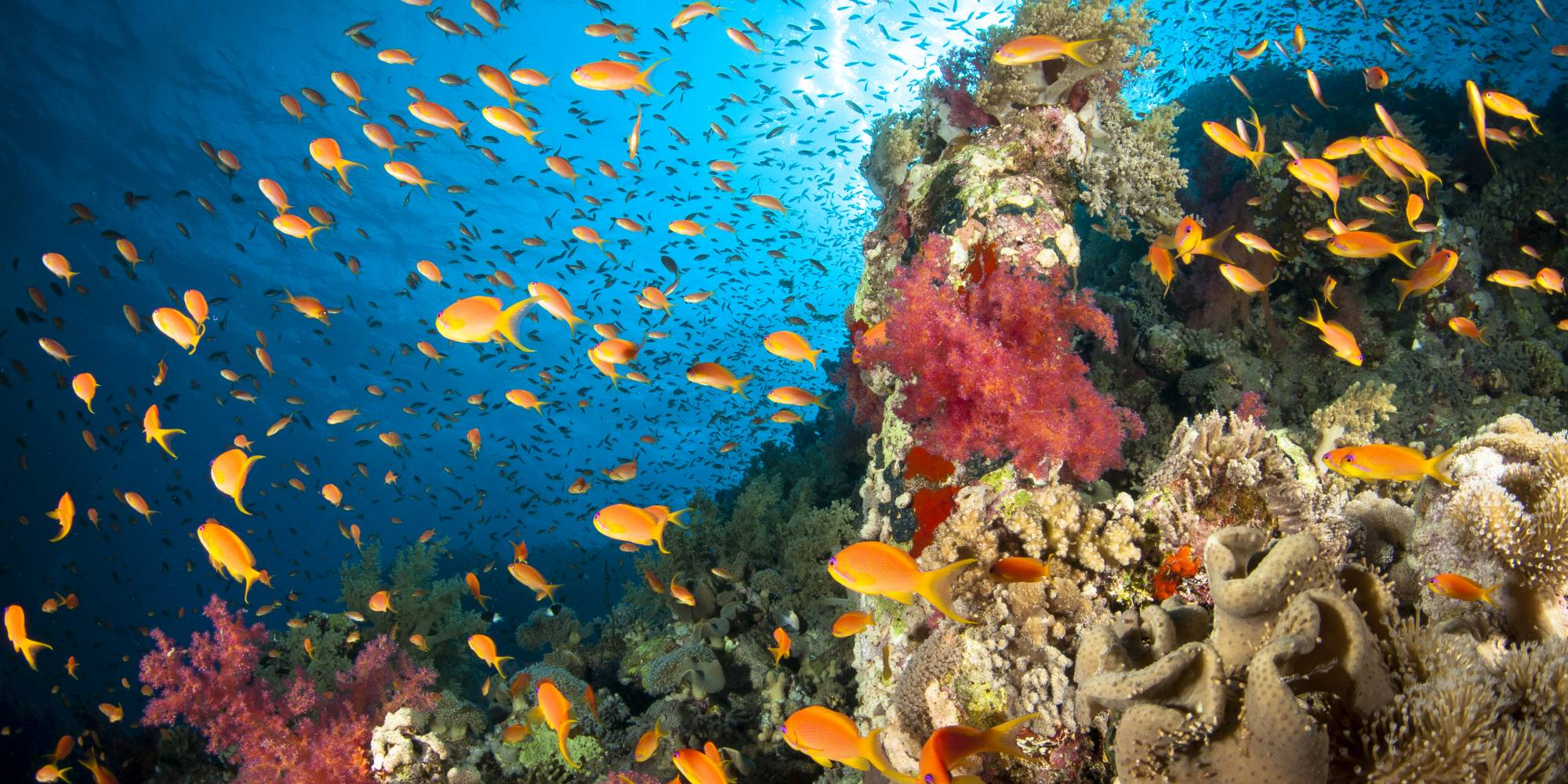 A coral reef teems with biodiversity; Getty Images